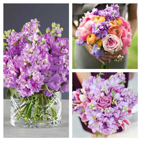 Wedding Flowers Available In October In Australia : Purple flowers available in october south africa the