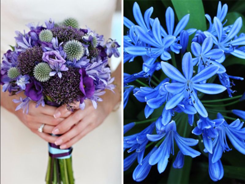 Wedding Flowers For May Season : May flowers best in season for your