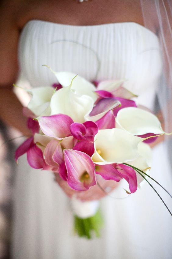 From Pastels to Vibrant Hues: 15 Most Beautiful Calla Lily ...